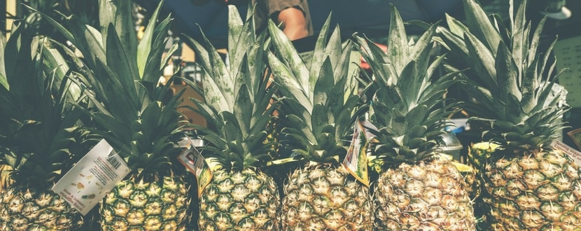 organically farmed pineapples in a row