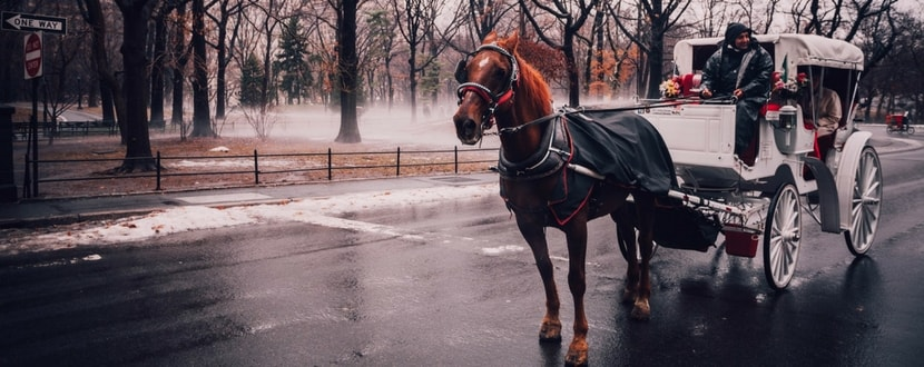 central-park-new-york-horse-carriage-min