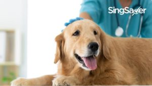 Guide To Vet Clinics In Singapore: How Much Does It Cost To Treat Your Sick Pets