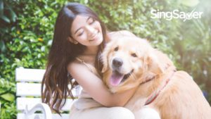 The Real Cost Of Dog Ownership In Singapore