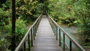 Best Nature Reserves and Parks For Leisure Hikes and Strolls in Singapore