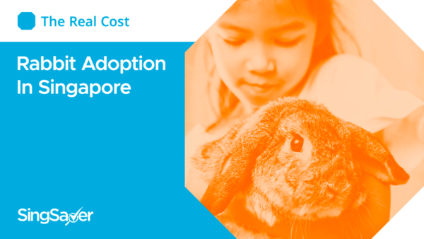 The Real Cost Of Rabbit Adoption In Singapore And How To Go About Doing It